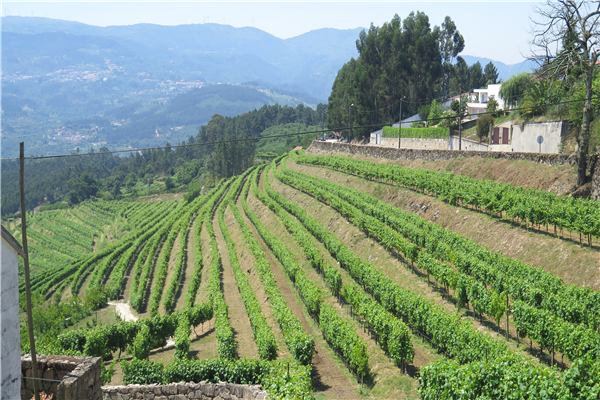 Quinta do Miradouro
