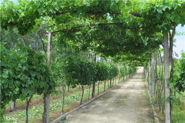 Quinta da Calca - 2339
