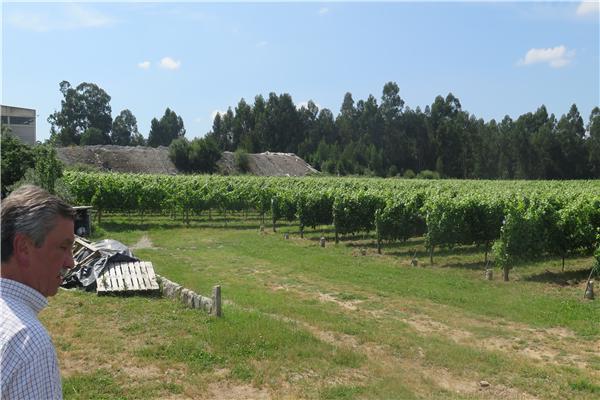 Quinta de Santiago - 2392