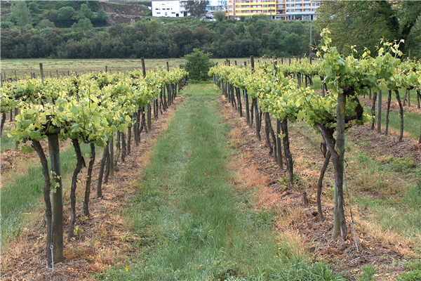 herbicida_linha2.jpg